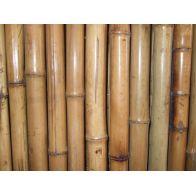 גדר במבוק מושחל עבה מאוד