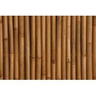 גדר במבוק מושחל עבה